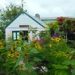 Turtle Cay garden