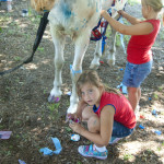 Decorating horses